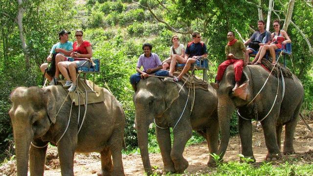 02-Elephant-Safari-In-Kochi