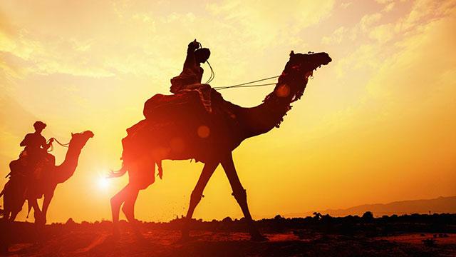 1-Camel-Safari