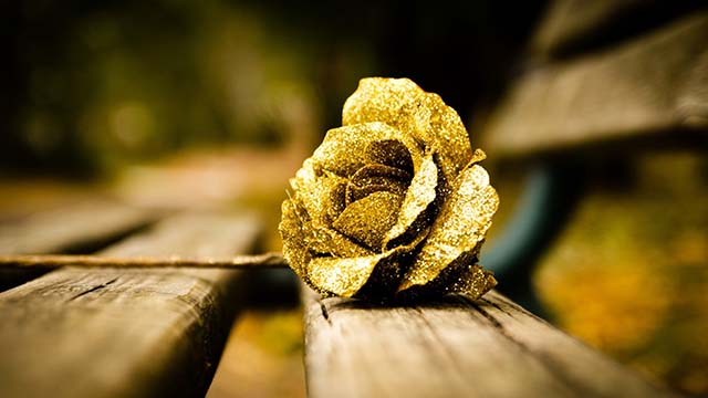 7-Gold-Roses-from-My-Flower-Tree