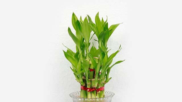8-Plants-from-Ferns-N-Petals