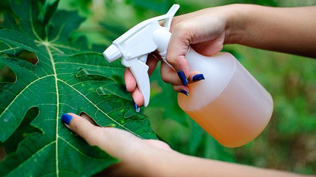 9-Treats-infestation-in-plants
