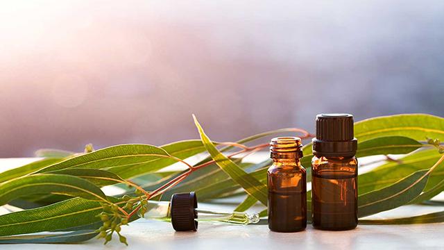 Benefits-of-Eucalyptus-Oil