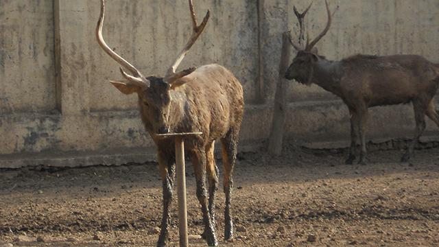Gwalior-Zoo