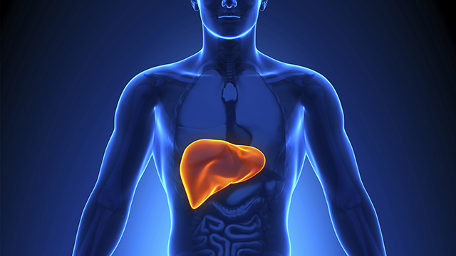 Liver-Protection