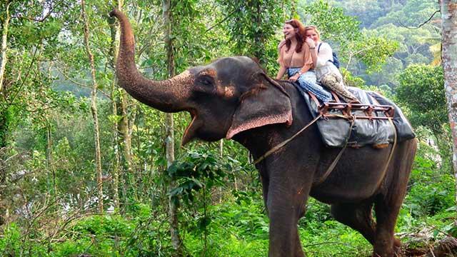 12-Elephant-Arrival-Spot