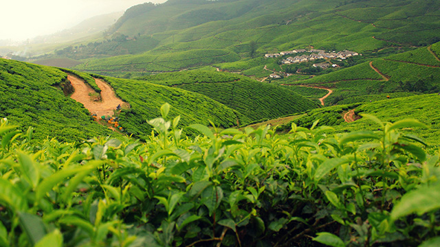 16-Kolukkumalai-Tea-Estate
