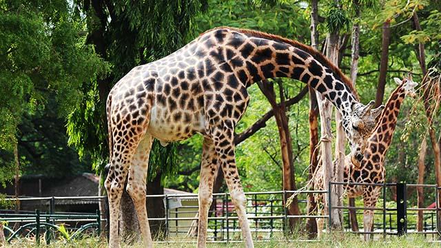 4-Mysore-Zoo