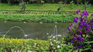 7-Blossoms-Park-1-300x169