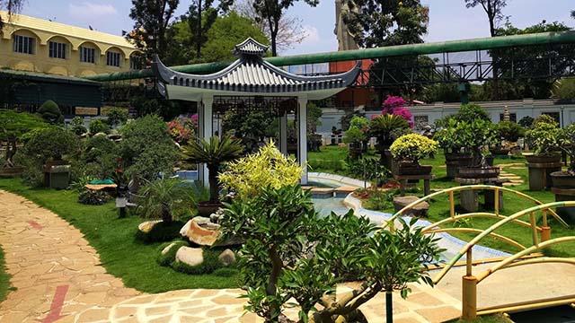 7-Bonsai-Garden