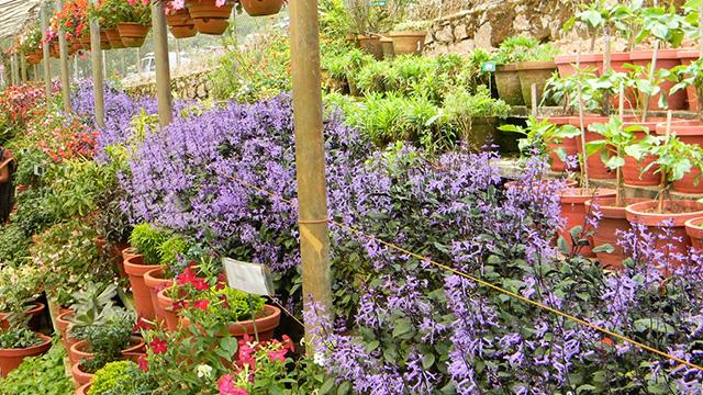 7-Floriculture-Centre-a