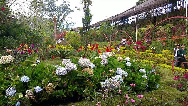 7-Rose-Garden