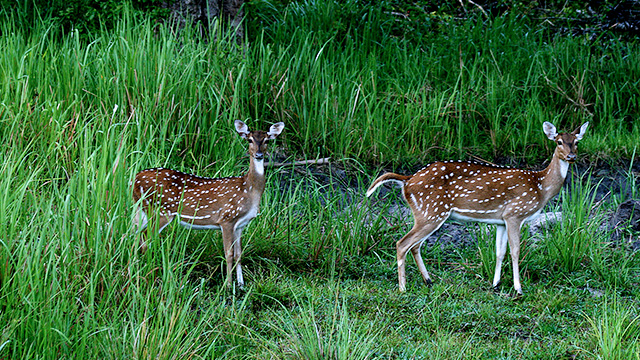 9-Nagarhole-National-Park-b
