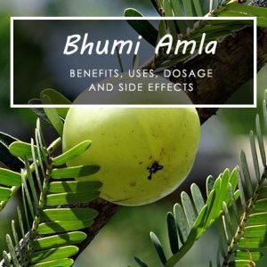 Bhumi Amla (Phyllanthus Niruri): Uses, Benefits, Side Effects, FAQs & More