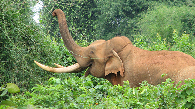 Chandaka-Wildlife-Division