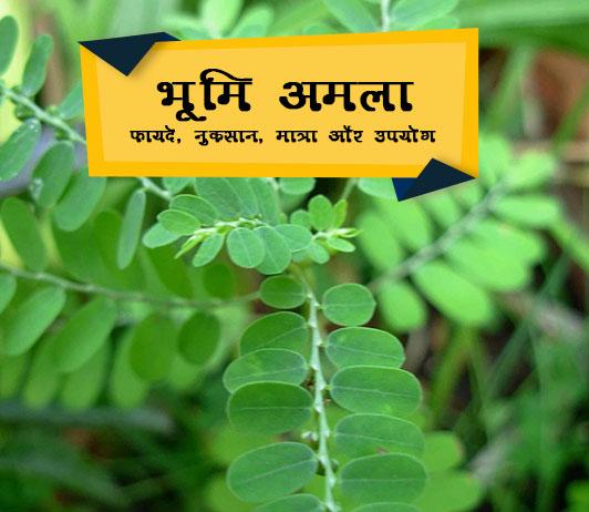 Bhumi Amla ke fayde in Hindi भूमि अमला: फायदे, नुकसान, मात्रा और उपयोग