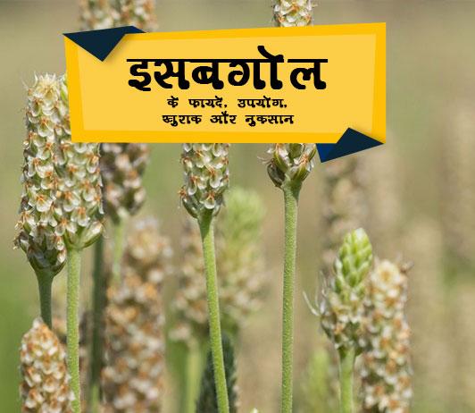 isabgol ke fayde in hindiइसबगोल के फायदे, उपयोग, खुराक और नुक्सान