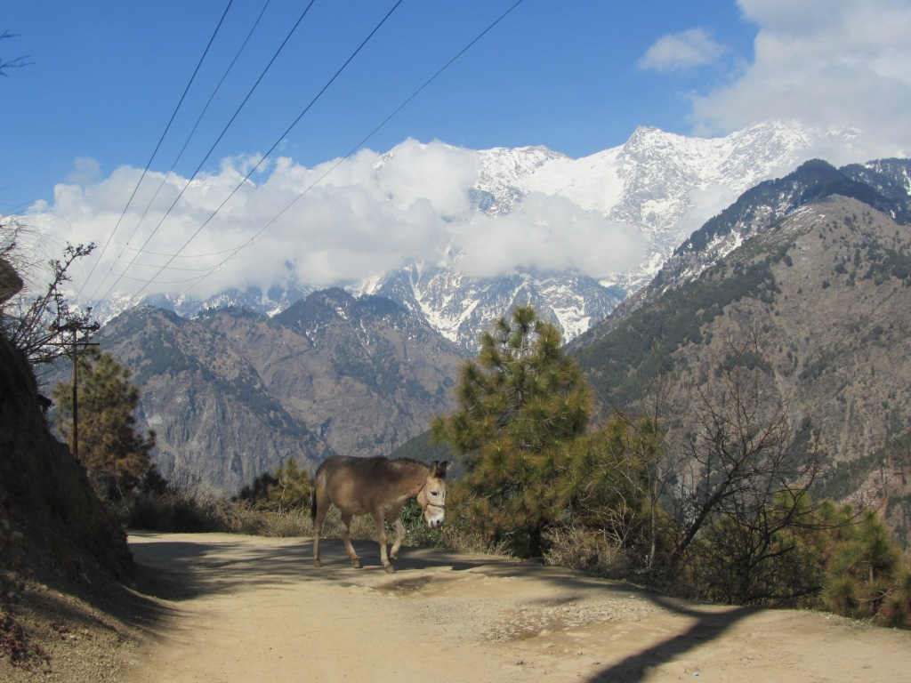 नंदी व्यू प्वाइंट, Naddi View Point one of the tourist places in dharamshala