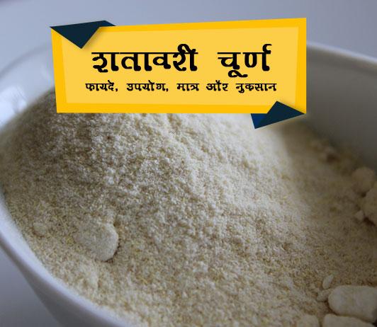 Shatavari Churna ke fayde in Hindi शतावरी चूर्ण के फायदे, प्रयोग, खुराक और नुकसान
