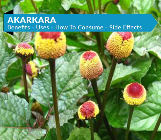 Akarkara: 5 Best Benefits, Side Effects, Uses, Dosage & Price