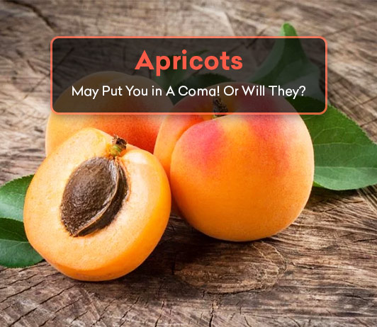 Apricots May Put You in A Coma! Or will they? Read To Find Out