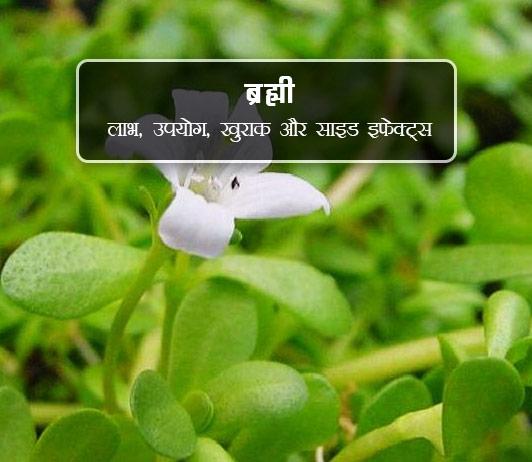 brahmi ke fayde aur nuksan in hindi