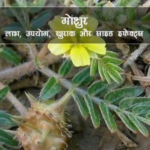 Gokshura ke fayde in Hindi गोक्षुरा: लाभ, उपयोग, खुराक, दुष्प्रभाव, मूल्य
