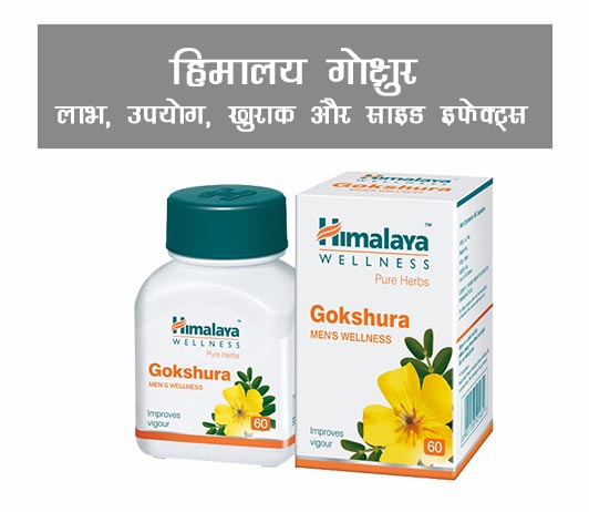 Himalaya Gokshura ke fayde in Hindi हिमालय गोक्षुर: लाभ, उपयोग, फायदे, खुराक और साइड इफेक्ट्स