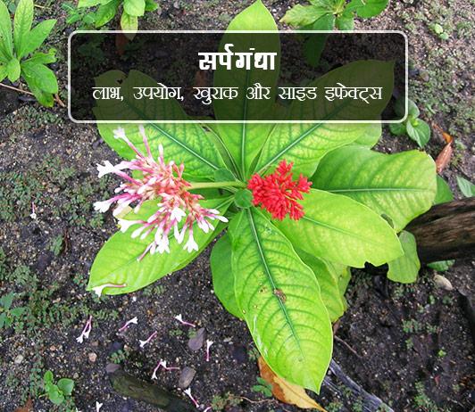 sarpgandha ke fayde aur nuksan in hindi