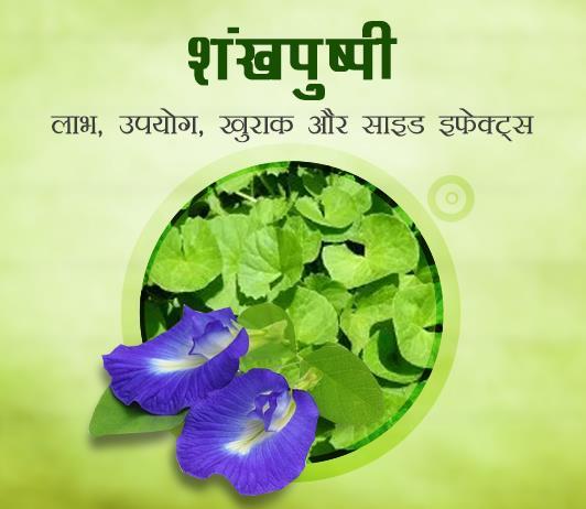 shankhpushpi ke fayde aur nuksan in hindi