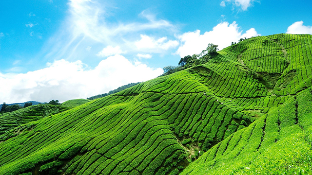 Munnar - Beautiful Hill Station in South India