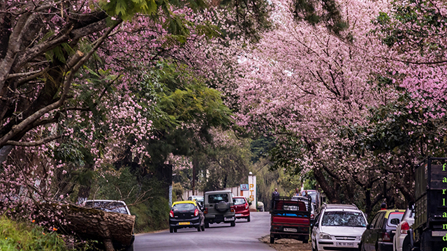 Shillong - Exceptional Hill Station For Honeymoon