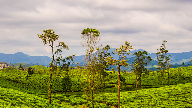 Valparai - Windy Hill Station in Tamil Nadu