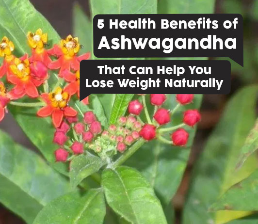 5 Health Benefits of Ashwagandha That Can Help You Lose Weight Naturally