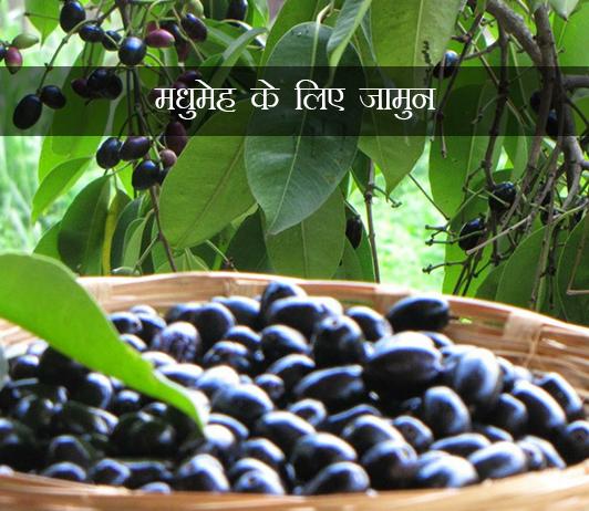 मधुमेह के लिए जामुन (Jamun For Diabetes In Hindi): क्या यह सुरक्षित है, लाभ, उपयोग करने के तरीके और विशेषज्ञ युक्तियां