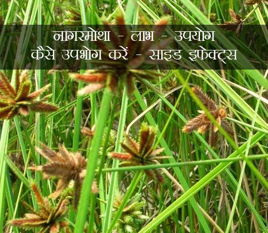 नागरमोथा: लाभ, उपयोग, कैसे उपभोग करें, साइड इफेक्ट्स (Nagarmotha In Hindi)