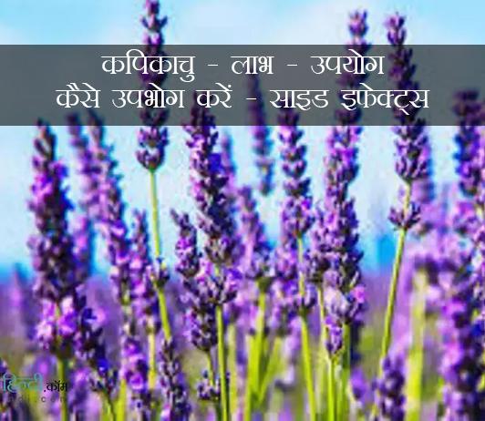 कपिकाचु - लाभ - उपयोग - कैसे उपभोग करें - साइड इफेक्ट्स (kapikacchu In Hindi)