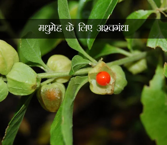 Ashwagandha for Diabetes ke fayde aur nuksan in hindi