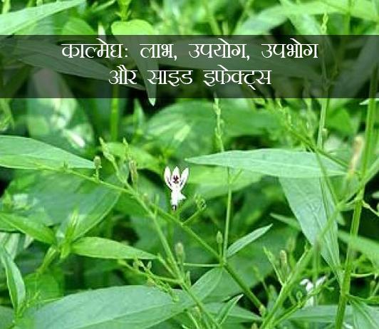 Kalmegh ke fayde aur nuksan in hindi