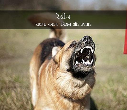 Rabies in Hindi