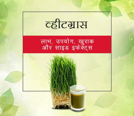 Wheatgrass in Hindi व्हीटग्रास: लाभ, उपयोग, खुराक और साइड इफेक्ट्स