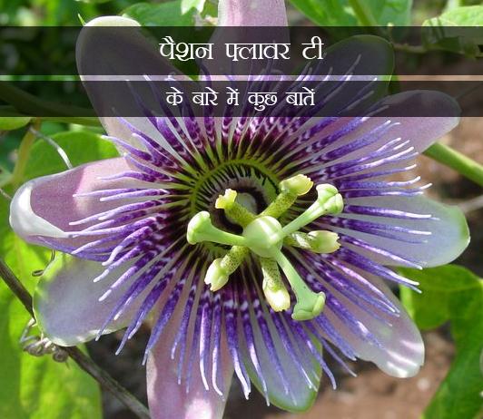 The Truth About Passion Flower Tea in Hindi पैशन फ्लावर टी के बारे में कुछ बातें