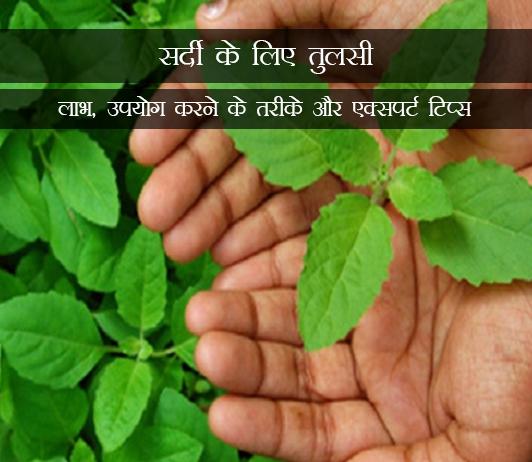 Tulsi for Cold in Hindi सर्दी के लिए तुलसी: लाभ, उपयोग करने के तरीके और एक्सपर्ट टिप्स