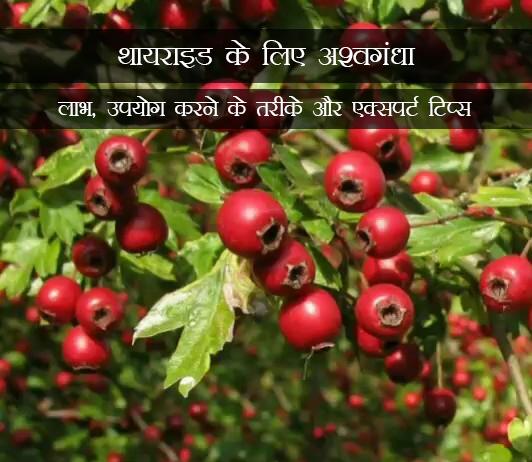 Ashwagandha for Thyroid in Hindi यराइड के लिए अश्वगंधा: लाभ, उपयोग करने के तरीके और एक्सपर्ट टिप्स