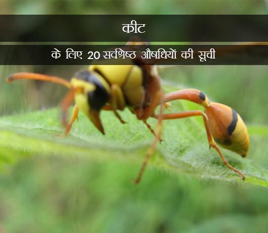 Medicines for Insect Bites in Hindi कीट के काटने के लिए 20 सर्वश्रेष्ठ औषधियों की सूची - संरचना, खुराक, लोकप्रियता (2019)