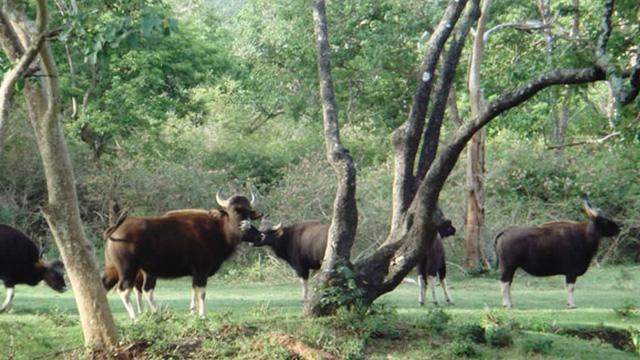 Dibru-Saikhowa National Park