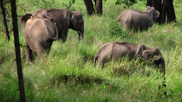 Nilgiri-Biosphere-Reserve