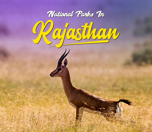 National Parks In Rajasthan: Top 16 National Parks & Wildlife Sanctuaries In Rajasthan