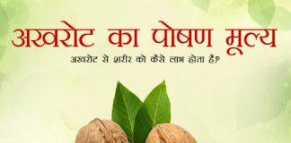Walnuts/Akhrot Nutritional Value in Hindi अखरोट का पोषण मूल्य - अखरोट से शरीर को कैसे लाभ होता है?