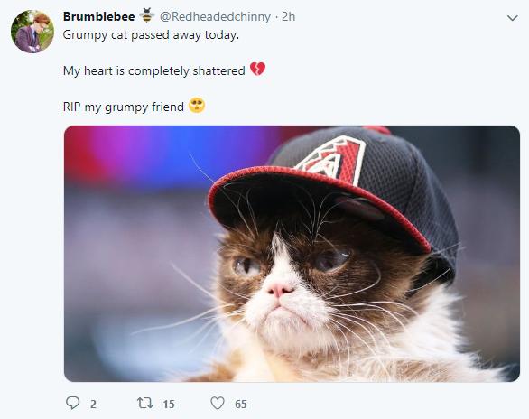 Grumpy Cat Dies At Seven