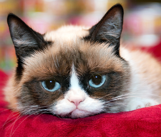 Internet Legend – Grumpy Cat Dies At Seven